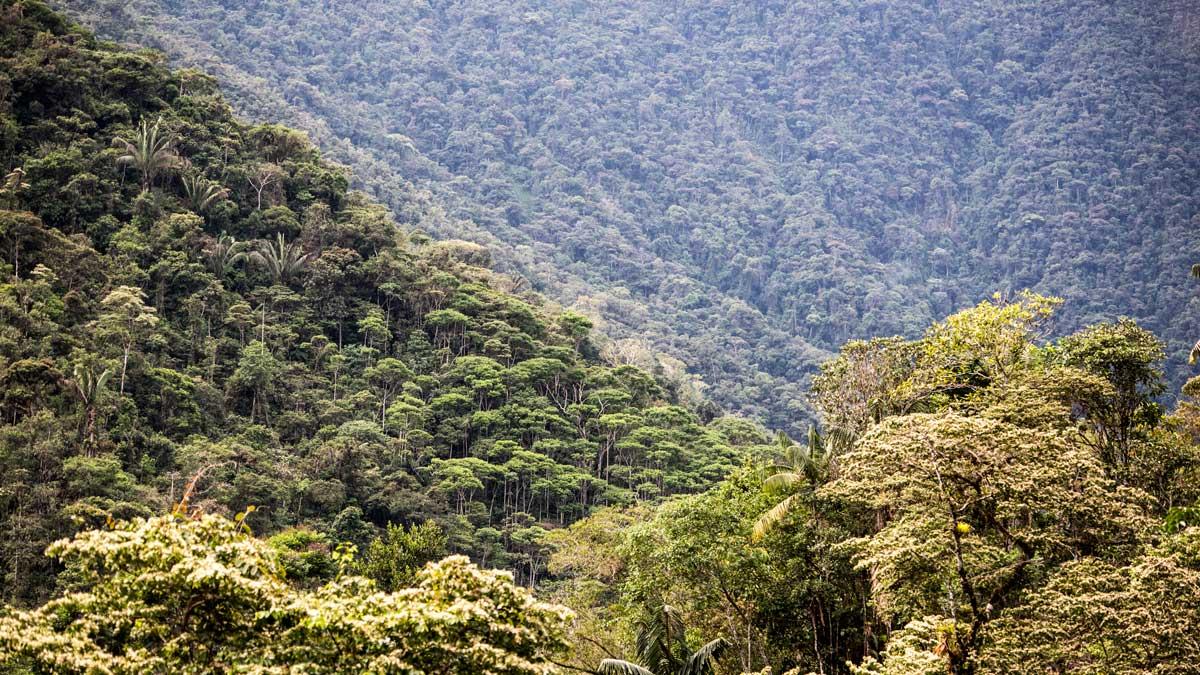 Premontane Tropical Forest, Copalinga, Ecuador | ©Angela Drake