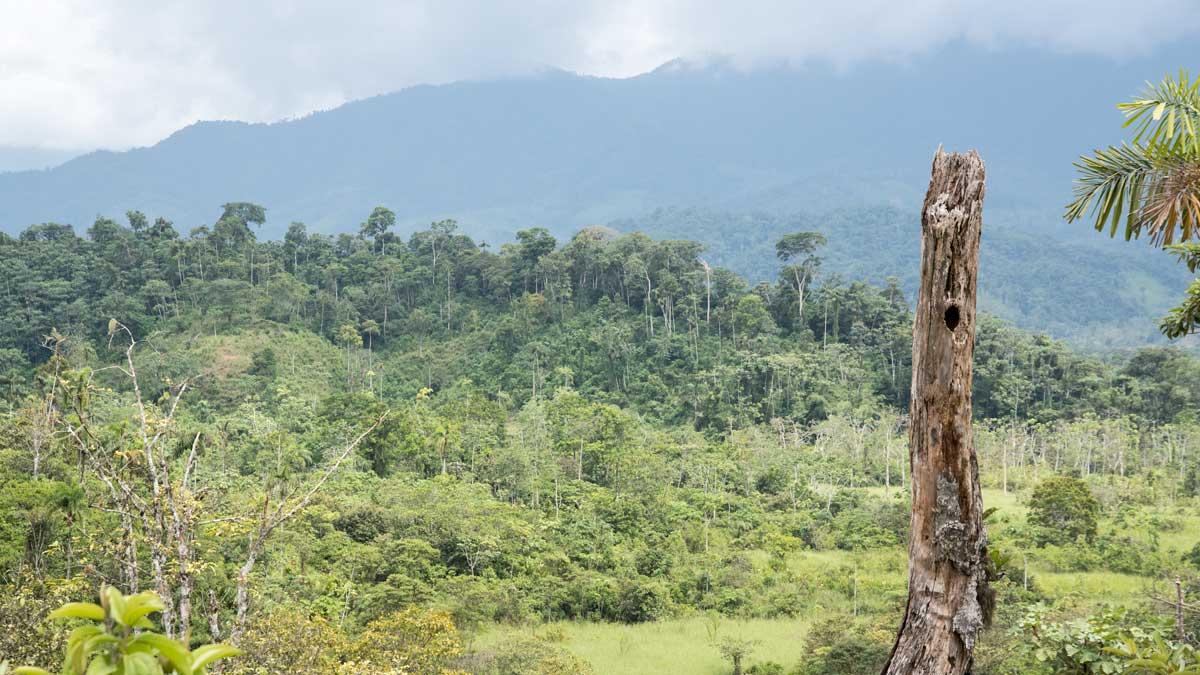 The foothills on the way to Cabañas Yankuam, Ecuador   ©Angela Drake