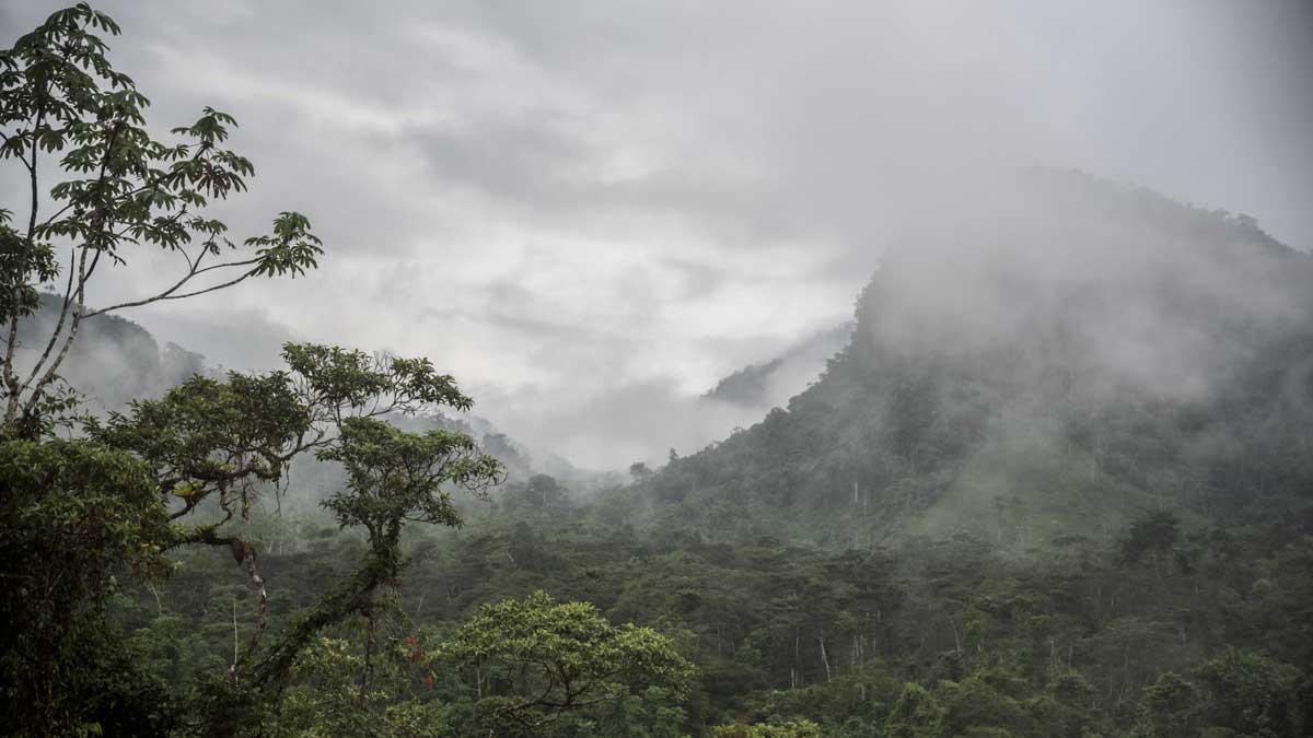 A misty morning leaving Cabañas Yankuam back towards the E-45   ©Angela Drake