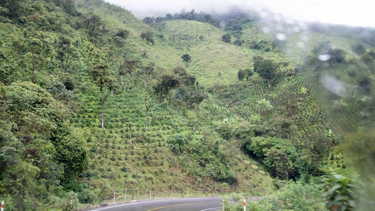 Coffee Farm before Utuana, Ecuador   ©Angela Drake