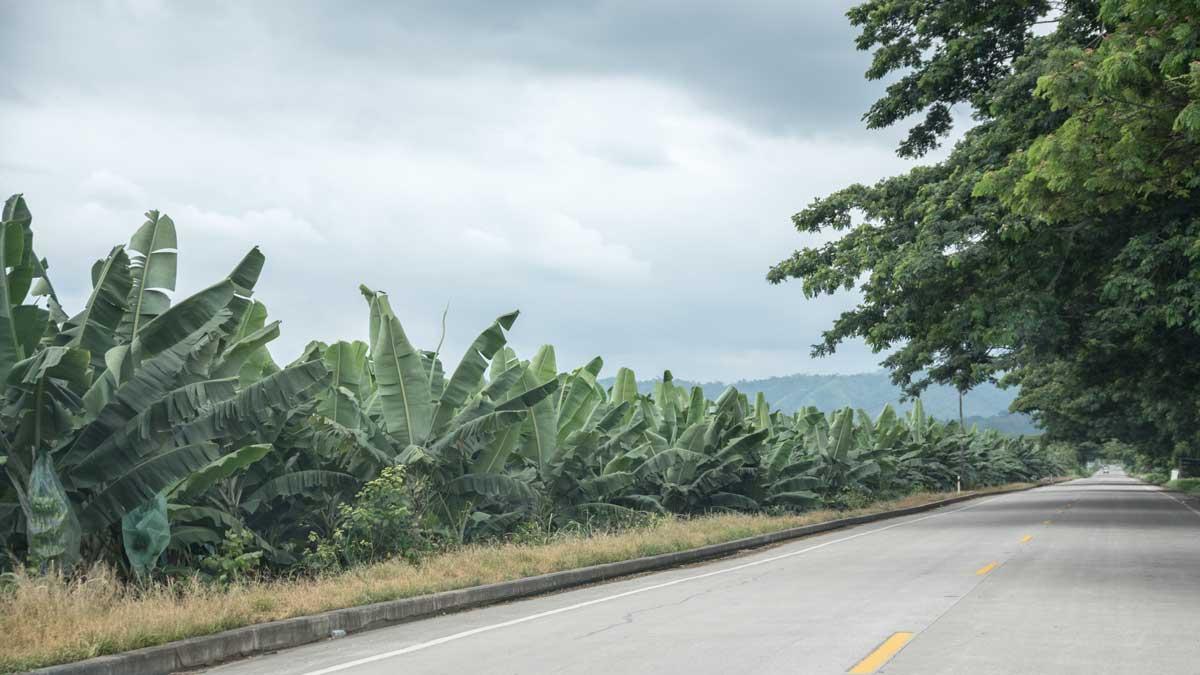 Banana Plantations along the E-25   ©Angela Drake