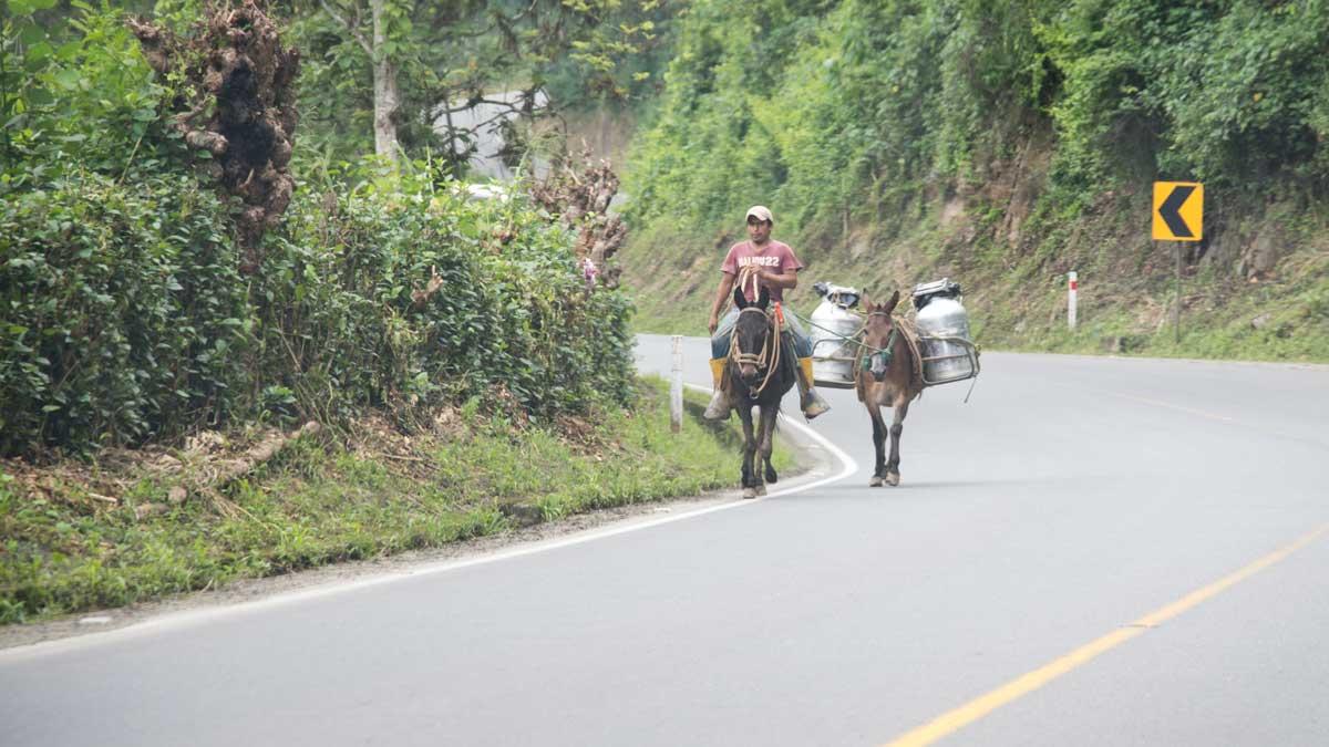 Milk delivery near Zaruma, Ecuador   ©Angela Drake