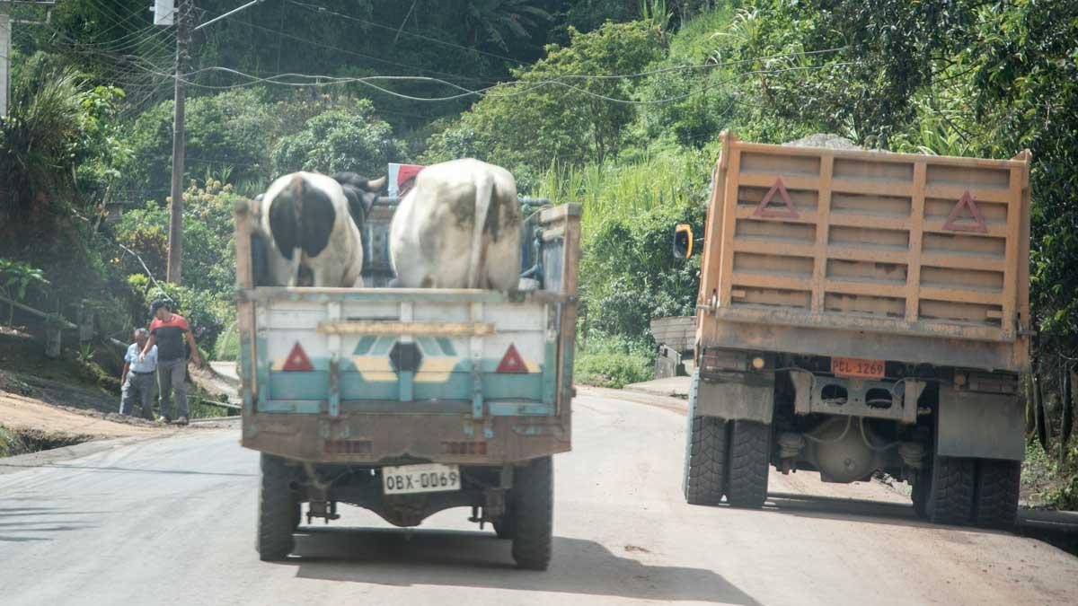 Typical traffic in rural Ecuador   ©Angela Drake