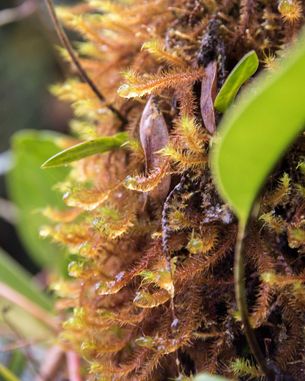 Mosses, Tapichalaca Reserve, Ecuador | ©Angela Drake