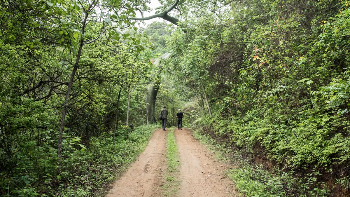 Birdwatching along the dirt road at the Jorupe Reserve | ©Angela Drake