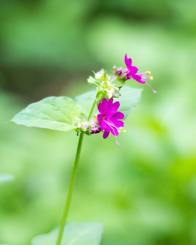 Wildflower, Jorupe Reserve, Ecuador | ©Angela Drake