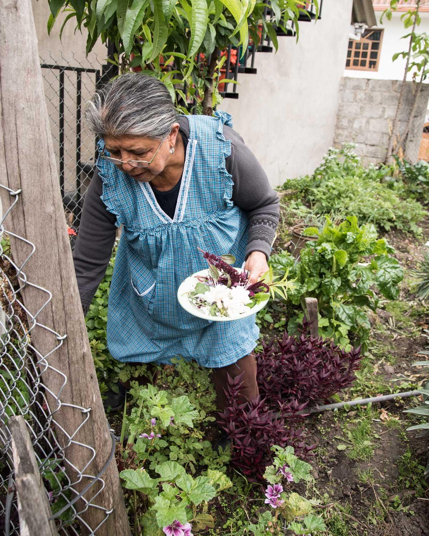 Señora Elmira harvests plants to make horchata, San Bartolome, Ecuador | ©Angela Drake