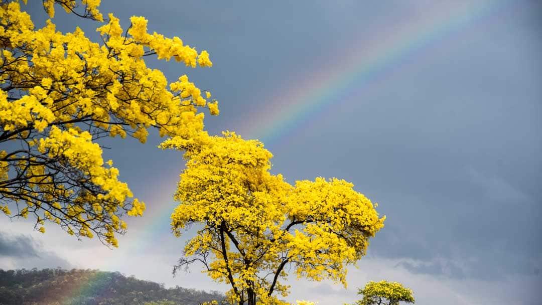 Guayacanes and Rainbow; Mangahurco, Ecuador | ©Angela Drake