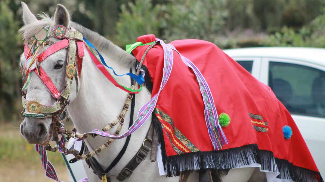 Horse Dressed for the San Juan Procession | ©Felipe Escola